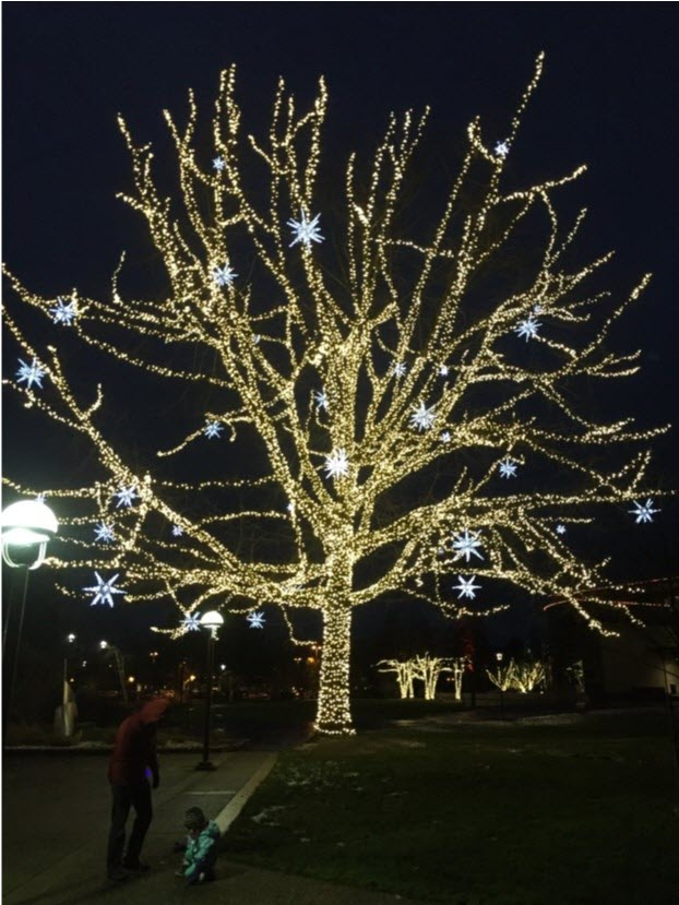 Redmond Tree Lights